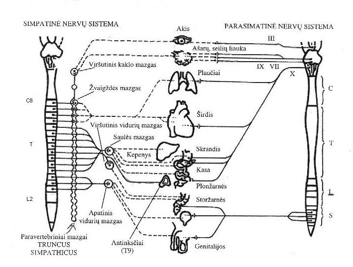 Simpatines nervu sistemos sutrikimai